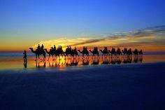 とあるビーチで撮影された「ラクダの隊列」が嘘みたいに美しい | RETRIP