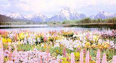 The big beautiful garden