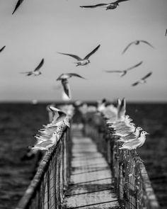 Fotografía de Paolo Jomi