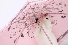 #pink umbrela #cat