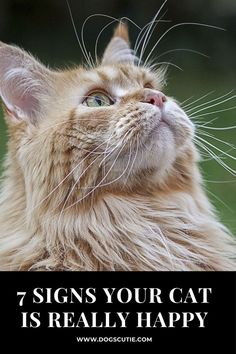 Cat owners know that cats are picky and complex. We love them all the more for these quirky habits.