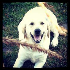Tucker enjoying the fall weather