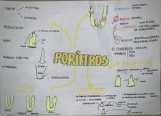#poriferos #zoologia #biologia #resumo