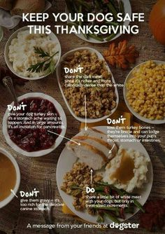 #Thanksgiving Do's and Don'ts for Fido! #dog #tips dogs, dog lovers, dog tips, dog food, food safety, safety tips, thanksgiving foods, dog safe, pet tips