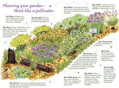 This infographic shares amazing ideas for creating a garden for pollinators using native plants. This is a great image with all sorts of useful information. Vegetable Garden, Garden Plants, Garden Walls, Green Garden, Agriculture, Decoration Chic, Vertical Farming, Hummingbird Garden, Bee Friendly