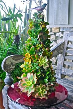 Succulent Christmas tree- how cute is that! Just use a foam cone and pin them in- dismantle and report after the season... from so cal nursery plants