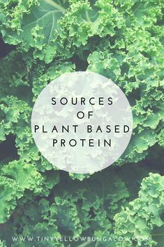 Interested in learning about plant based protein?? Check out this list!! Vegan protein sources are good for your body, for your wallet, the environment, and the animals!!