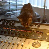 Cat Sounds by Insomaniac117 on SoundCloud