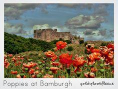Bamburgh Castle Poppies