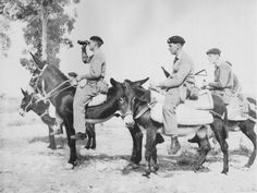 Household Cavalry Donkey Patrol in Cyprus 1958.    Courtesy: New Society for the Diffusion of Knowledge (NSDK), Southampton, Hampshire, (United Kingdom).
