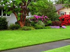 Image result for beautiful lawn