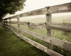 Rustic country photo