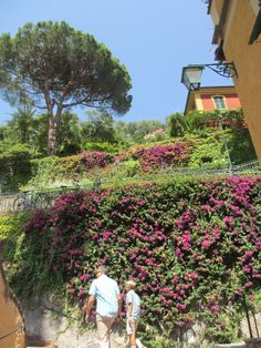 Cascades of flowering vines at the Splendido Hotel in Portofino, Italy.