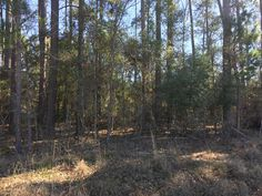 Half-acre lot very near Lake Livingston in the Carlisle Cove subdivision. Lot is heavily wooded so you can clear as much or as little as you need for your new home.