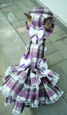 Summer harness dog dress with hat leash and small bow Birthday