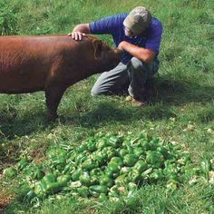 In a leader-follower grazing system, animals with different forage needs pass through a pasture in succession, using the land more efficiently without destroying its ability to support livestock.
