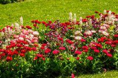 Чтобы получить обворожительную клумбу, подбирайте декоративные растения не только по форме и размерам, но и по окраске цветков и листьев. Мы расскажем, как добиться гармонии цвета при создании композиций в саду.