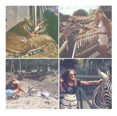 """""""The Aminal You See at the Zoo"""" by sraaguspayne ❤ liked on Polyvore"""