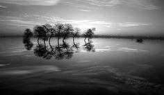 Trees at Dusk - Nature