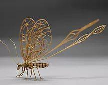 Nemoptera sinuatus