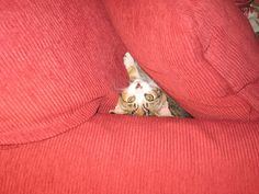She thinks she is hiding