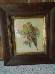 Vintage Framed Avian Bird Print Parrots by LemonIceBoxPie on Etsy, $32.50