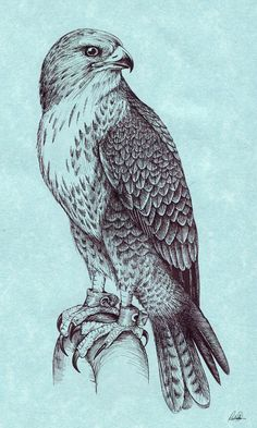 Peregrine Falcon by Grwobert