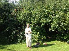 Helle foran æbletræet i sin have
