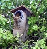 There once was a bird who lived in a shoe...............