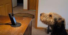 Hunden saknar sin matte och ringer henne. När han börjar prata kan ingen hålla sig för skratt.
