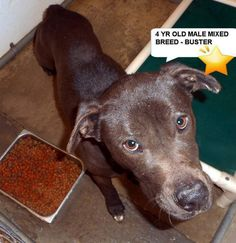 """BUSTER • 4 years old • Labrador Retriever Mix • Male • """"We lost Buster to Parvo"""" • 05/14/17 • ℹ️For More Pics, Videos & Info: http://www.dogsindanger.com/dog/1489808145489"""