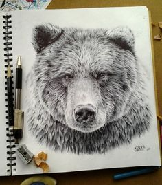 481 Best Bear Paintings Images In 2019 Bear Paintings