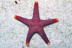 Pink Tile Starfish. Pink Tiles, Saltwater Tank, Polymer Clay Charms, Starfish, Sailor, Saltwater Aquarium, Polymer Clay Pendant