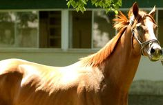 California Chrome by his stable June 1, 2014