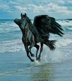 This Pegasus is related to blackjack her name is Black Beauty you know after the book horse Mythical Creatures Art, Mythological Creatures, Magical Creatures, Fantasy Creatures, Beautiful Creatures, Elfen Fantasy, Fantasy Art, Pegasus, Unicorn Pictures