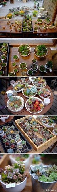 collection of succulent photos