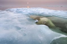 The Natural History Museum Wildlife Photographer of the Year Polar Bear (Ursus maritimus) hides submerged beneath melting sea ice in H. Wild Life, Photo Animaliere, Bay Photo, Nature Sauvage, Concours Photo, Sea Ice, Science Photos, Mundo Animal, Wild Nature