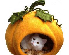 A cat bed. In a pumpkin. The cute. It burns.