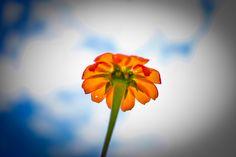 Zambia 09 flower
