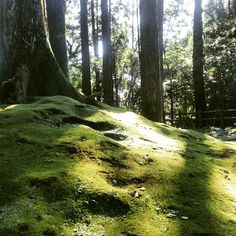 Forest covered with moss.
