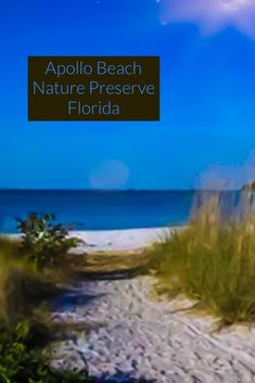 Dreaming of faraway places? It only takes one great travel agency to make your cruise vacation dreams become a reality. Best Places In Florida, Best Beach In Florida, Old Florida, Florida Beaches, Cruise Vacation, Vacation Destinations, Dream Vacations, Apollo Beach Florida, Boca Raton Beach