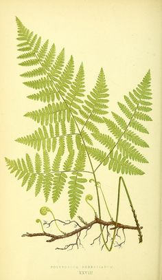 Bio Diversity - ferns