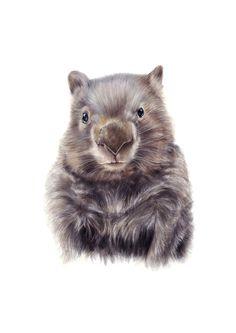 wombat illustration Australian animals nursery by NayanaIliffe Animal Paintings, Animal Drawings, Art Drawings, Pencil Drawings, Drawing Art, Wombat, Animal Nursery, Nursery Art, Project Nursery