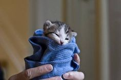 cute kitten 21 Daily Awww: Cats keep us entertained without even trying (33 photos)