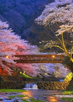 日本の風景(川辺の桜) pic.twitter.com/tftZOgykAM
