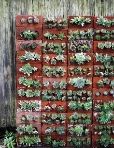 These are cinderblocks, looks like painted and then stacked vertically to make a succulent wall. No how to, though.
