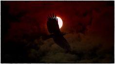 Crow  Animals photo by BertSeinstra http://rarme.com/?F9gZi