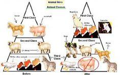 50 Best Animal Farm Images Animal Farm Summary Farm Animals Animals
