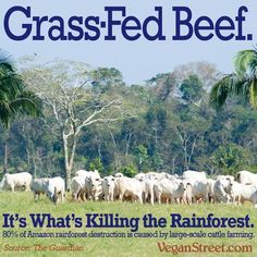 Animal Ag is destructive; 80% of the Amazon rainforest destruction is caused by large-scale cattle farming #vegan