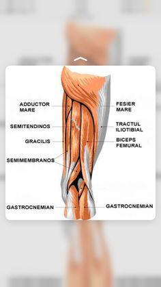 Human Body, Health, Biology, Anatomy, Health Care, Salud